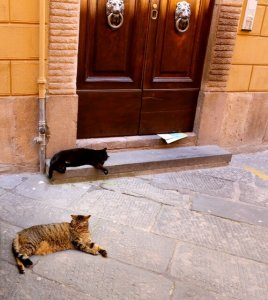 antique italian cats