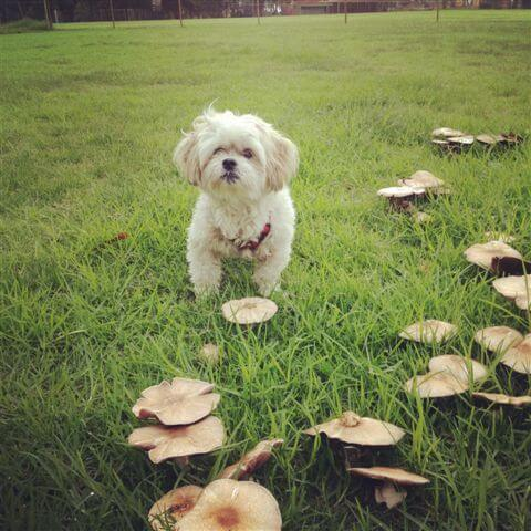 mushroon dog